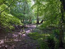 General - ancient woodlands