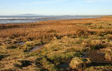 Places - saltmarsh-on-the-Solway-coast