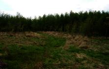 Places - Scotland-Forest-West-Foulshiels