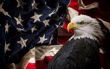 General - US Bald Eagle