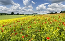 Places - Herts_green_belt