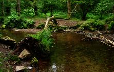 General - Flood River